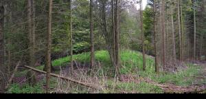 log barrow at Dorset cursus